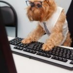 Work like a Dog Day: Honoring Hard Working Entrepreneurs